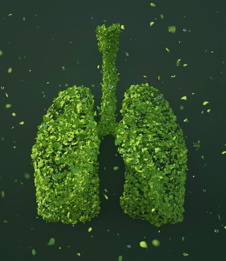 leaves, lungs, sustainability